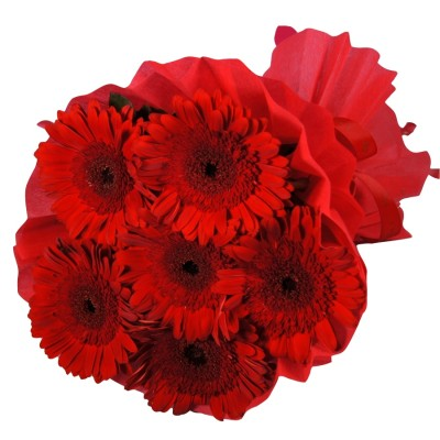 Passionately Yours ( 6 red Gerbera)