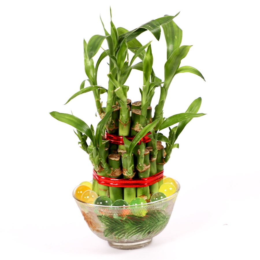 Vase of Lucky bamboos 2 layer